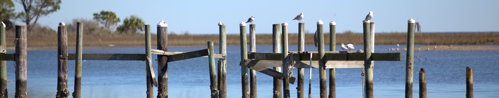 Birds resting on wooden poles